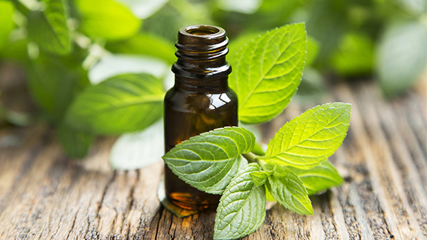 Best quality natural essential oils including Betel Leaf - Piper Betle, and other fragrance & perfume oils at the most discount rates by BMV Fragrances in UP, India.