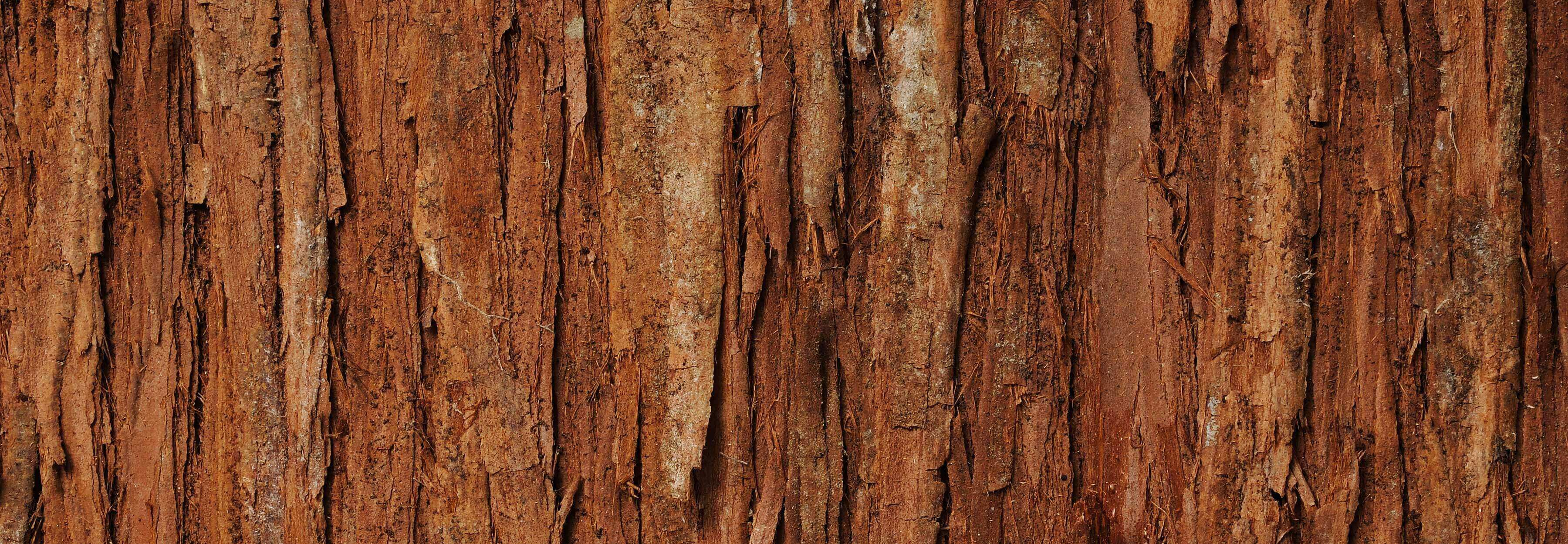 BMV Fragrances offers best quality cedarwood oil including reconstitution cedarwood super, Cedar Oil & is used for arthritis, bronchitis, etc. & as a general tonic and an insect repellant.