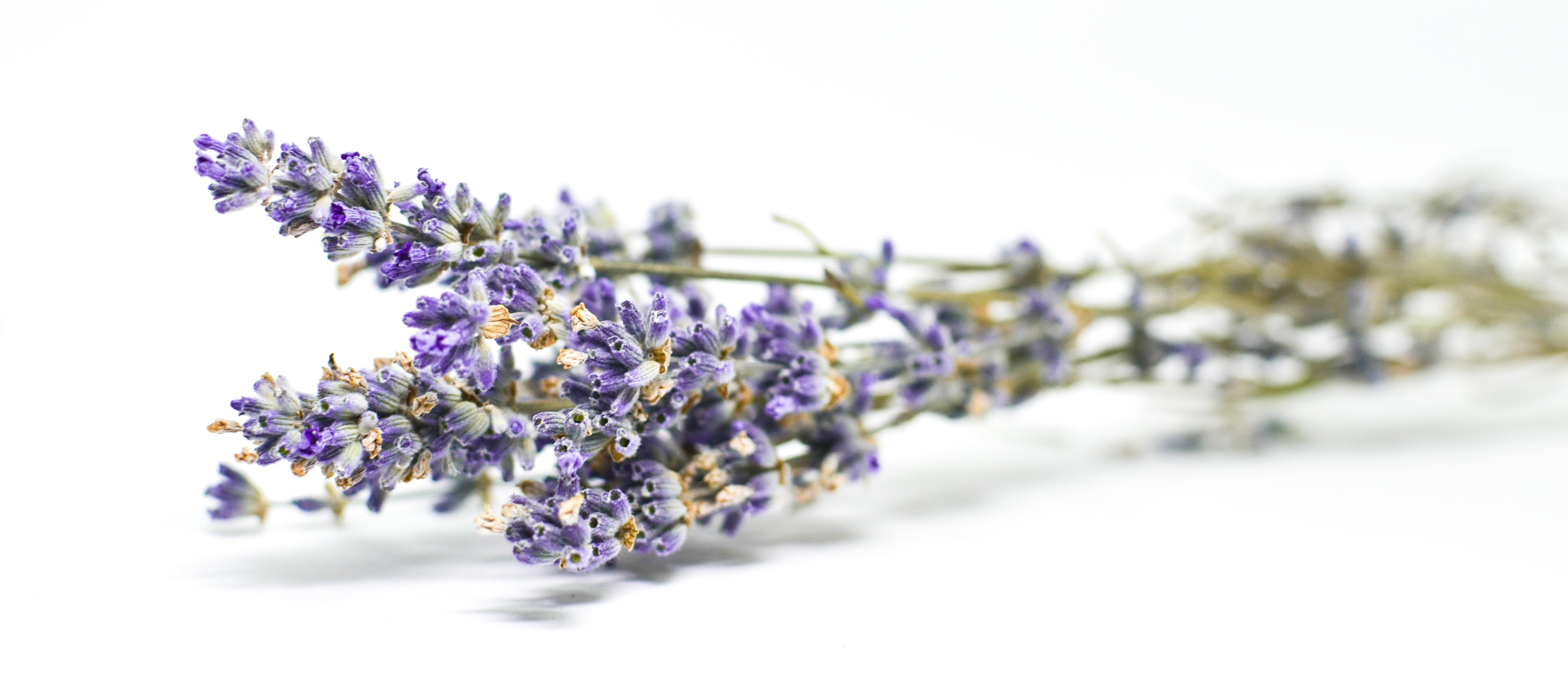 Best quality natural essential oils including Lavandin - (Lavandula x intermedia), Reconstitution Lavandin NNA, Lavandin Oil Super & Standard and other fragrance & perfume oils at the most discount rates by BMV Fragrances in UP, India.