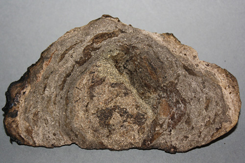 BMV Fragrances offers best quality Ambergris including Reconstitution Ambergris Maui, Ambergris CFT 13, Ambergris FC to offer perfumers a ready to use material with NO restrictions from UP, India.