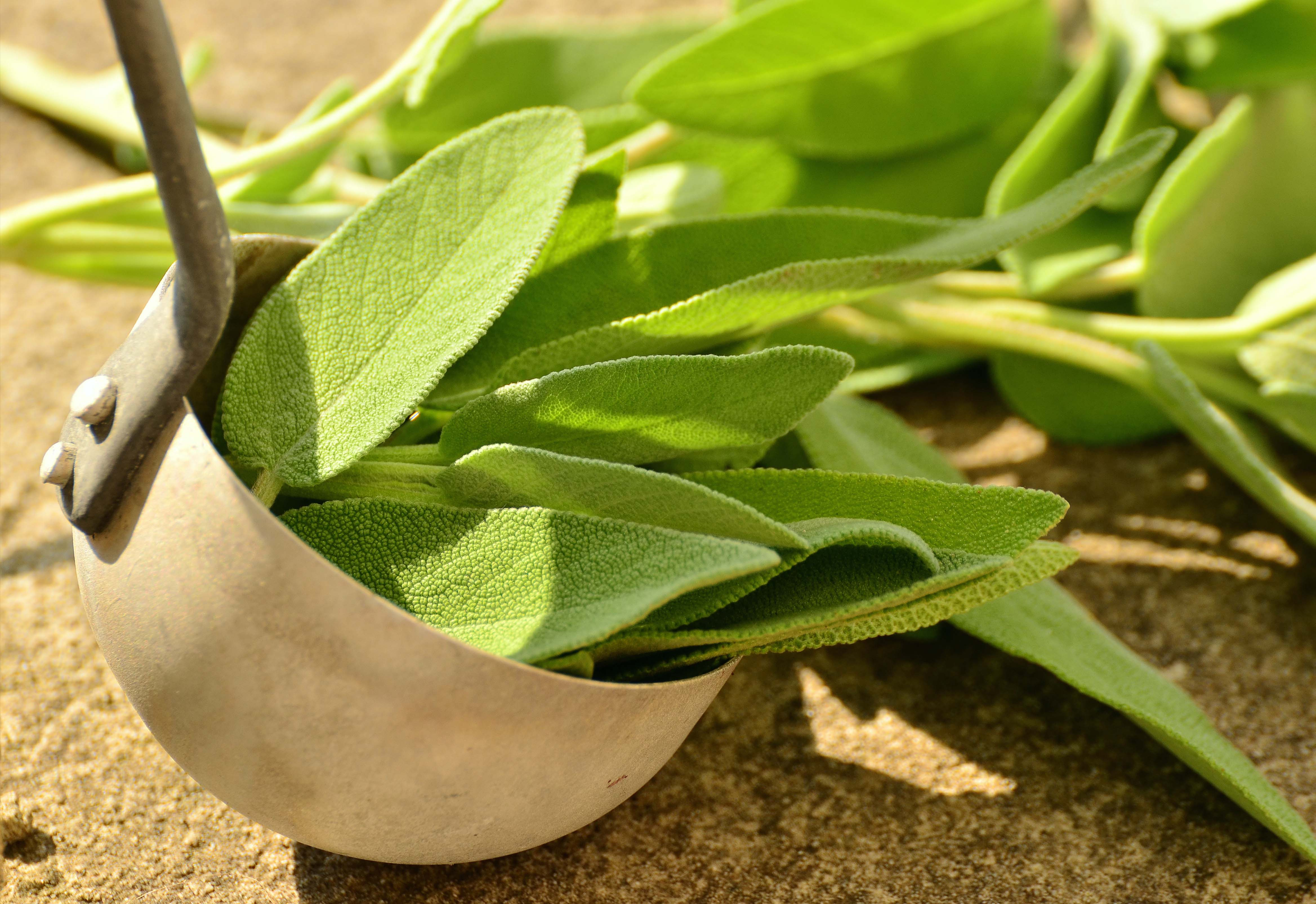 Best quality natural essential oils including Sage Oil - Reconstitution Sage and other fragrance & perfume oils at the most discount rates by BMV Fragrances in UP, India.