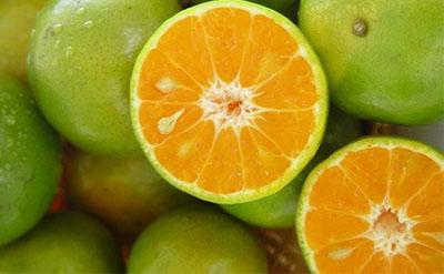 Bitter Orange Natural Essential Oil